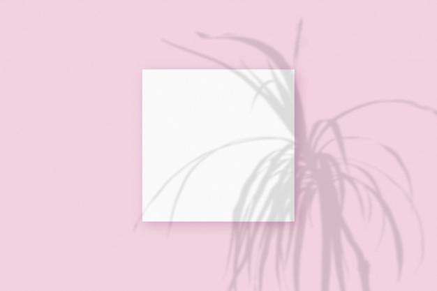 Natürliches licht wirft schatten von der pflanze auf ein quadratisches blatt weißes papier, das auf einem rosa strukturierten hintergrund liegt. attrappe, lehrmodell, simulation.