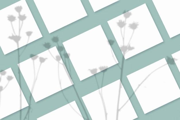 Natürliches licht wirft schatten von der pflanze auf mehrere quadratische weiße papierblätter, die auf einem grün strukturierten hintergrund liegen