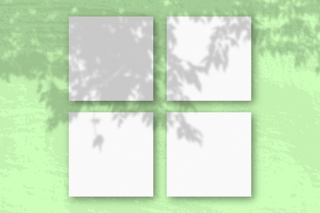 Natürliches licht wirft schatten von einem apfelbaumzweig auf 3 quadratische blätter