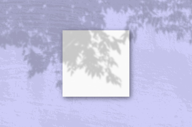 Natürliches licht wirft schatten von einem apfelbaumzweig auf quadratisches blatt