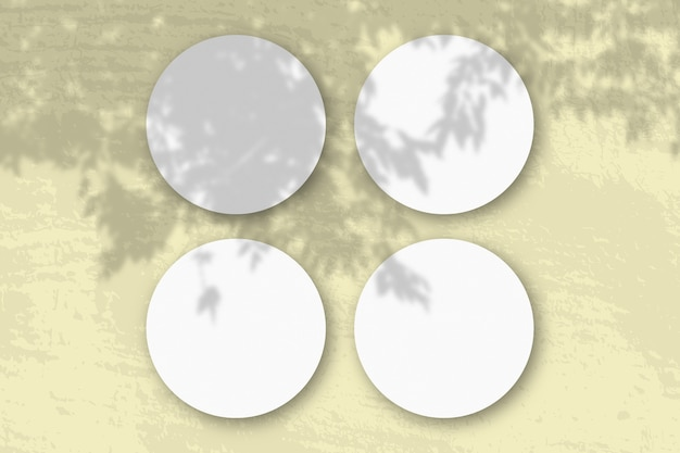 Natürliches licht wirft schatten von einem apfelbaumzweig auf runde blätter aus weißem strukturiertem papier