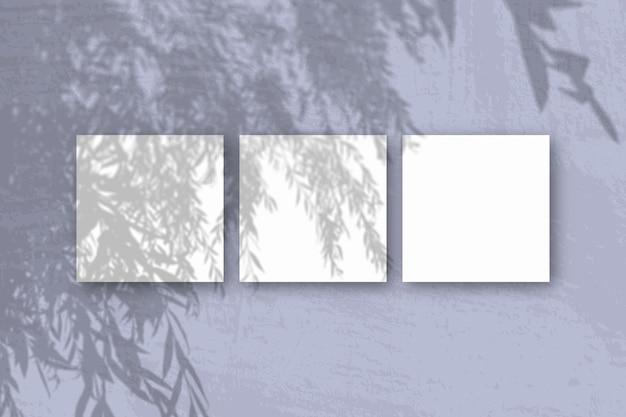 Natürliches licht wirft schatten von einem weidenzweig auf 3 quadratische blätter