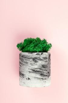 Natürliches moos stabilisiert grün. blume im topf. eco design interieur