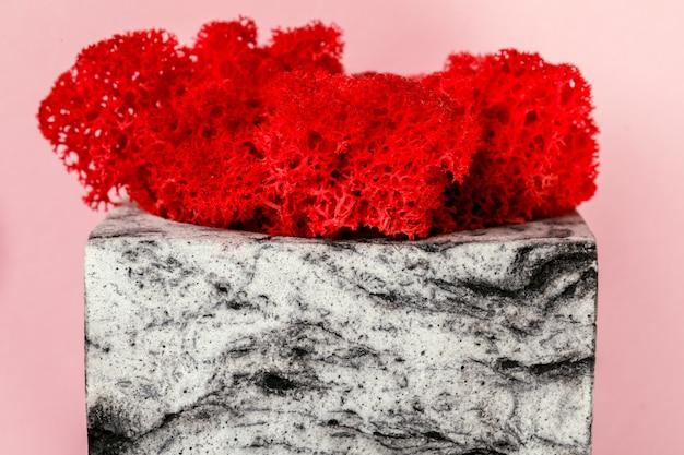 Natürliches moos stabilisiert rot. blume im topf.