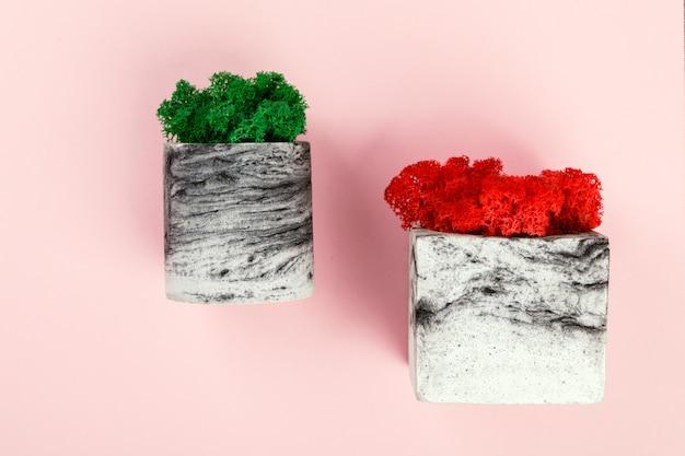 Natürliches moos stabilisiert sich rot und grün. blume im topf. eco design interieur