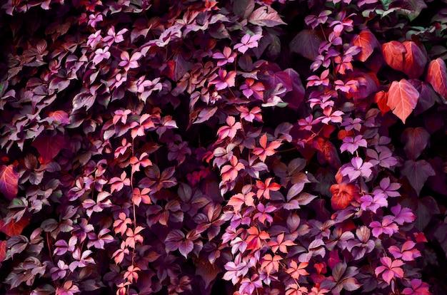 Natürliches muster der blätter von pflanzen.