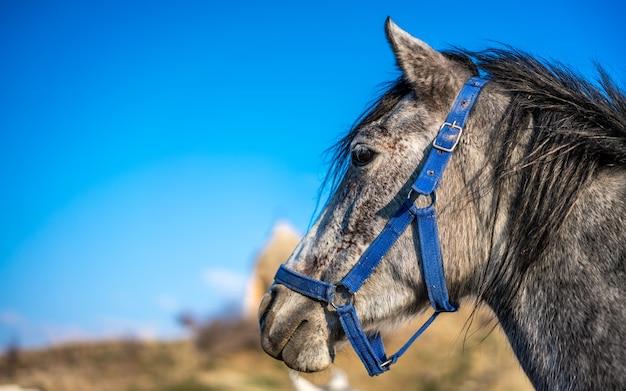 Natürliches pferd porträt