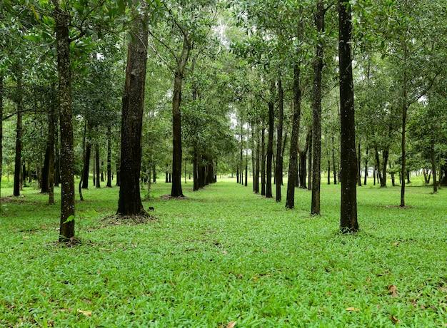 Natur, bäume im grünen wald.
