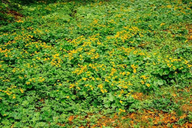 Natur, frühling, gras, dorf. ländliche spur. es kann als hintergrund verwendet werden