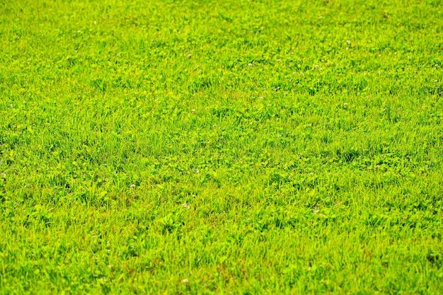 Natur grünes gras textur hintergrund gras draufsicht ideales konzept verwendet, um einen grünen boden rasen zu schaffen...