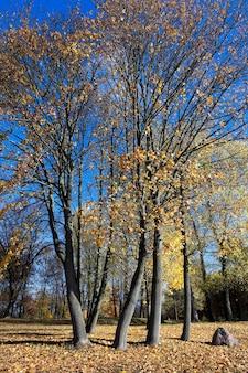 Natur im herbst, bäume und natur im herbst des jahres, vergilbte vegetation und bäume