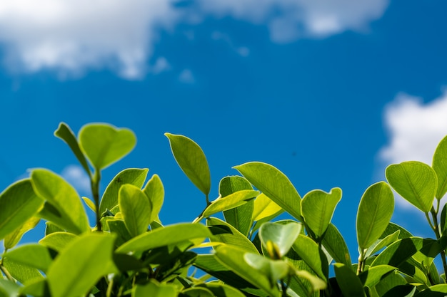 Natur lafe mit bluesky und wolke