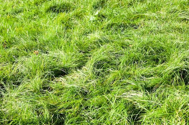 Natur mit grünem gras