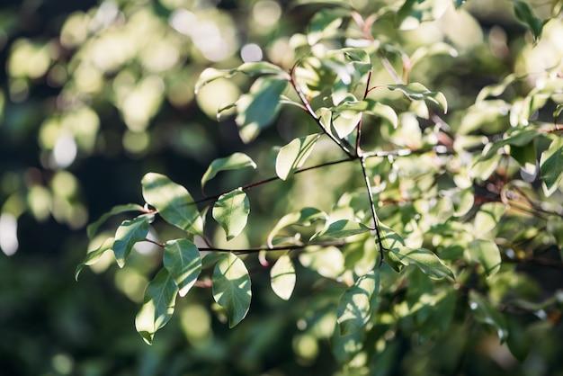 Natur sonnenschein grünes sonnenlicht licht