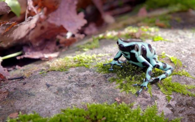 Natur-tiere costa ricas wild lebende tiere
