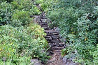 Natur treppe