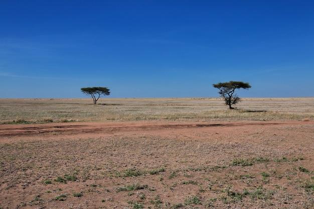 Natur von kenia und tansania, afrika