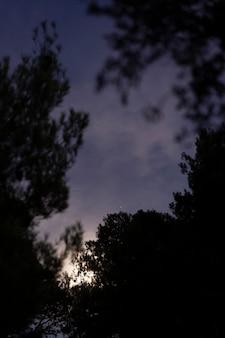Natur vor der nachtzeit