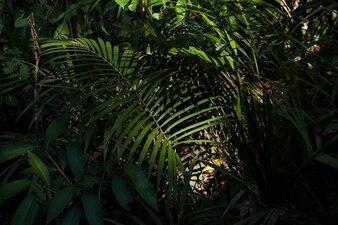 Natur-Wachstums-Umwelt-Grün-Ökologie