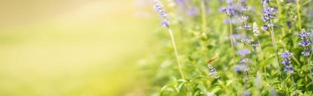 Naturansicht der orange libelle auf lila lavendelblume mit grüner natur verschwommener oberfläche mit kopienraum