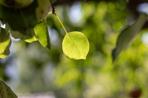 Naturansicht des grünen blattes auf unscharfem grünhintergrund im garten mit kopienraum als hintergrund