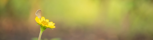 Naturansicht des schönen schmetterlings auf gelber blume mit grünem unscharfem hintergrund der natur im garten mit kopienraum, der als hintergrundinsekt, natürliche landschaft, ökologie, frisches deckblattkonzept verwendet.