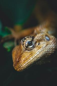 Naturansicht von reptilien auf grünem blatthintergrund. das chamäleon, das auf zweigen haftet. hat kopienraum, der als natürlicher ökologiehintergrund verwendet wird