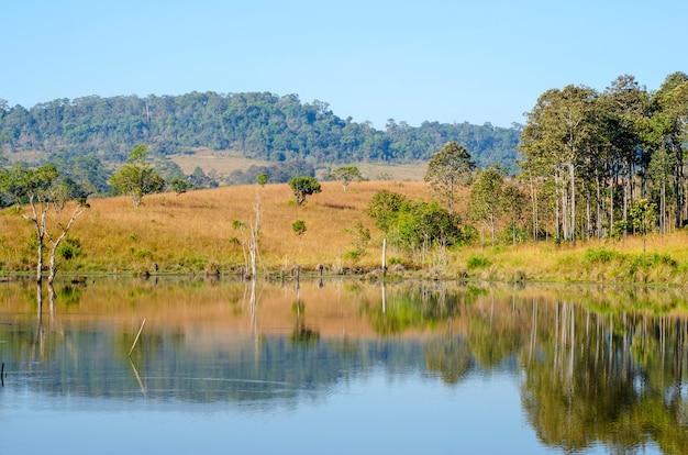 Naturbad mitten im wald im nationalpark