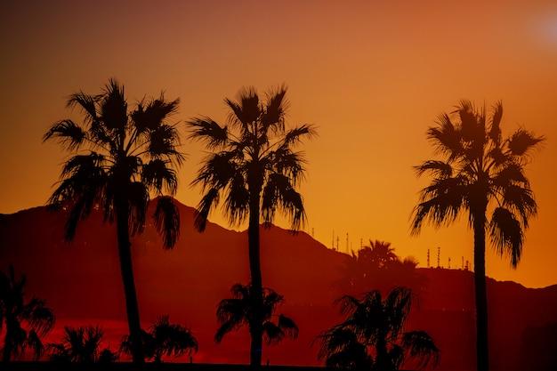 Naturberg der schönen ansicht von arizona mit schattenbildpalme auf der sonnenuntergangzeit