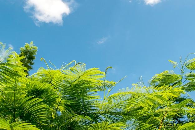 Naturblatt mit freiem raum