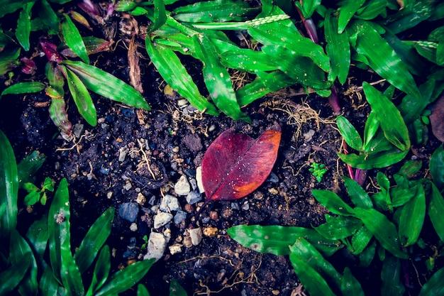 Nature natural ground leaf green