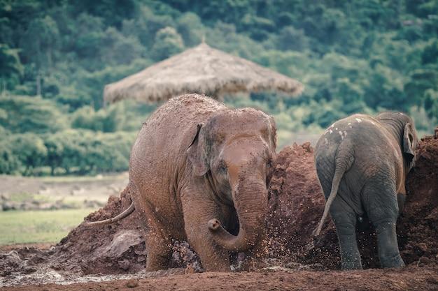 Naturelefant im wald von thailand