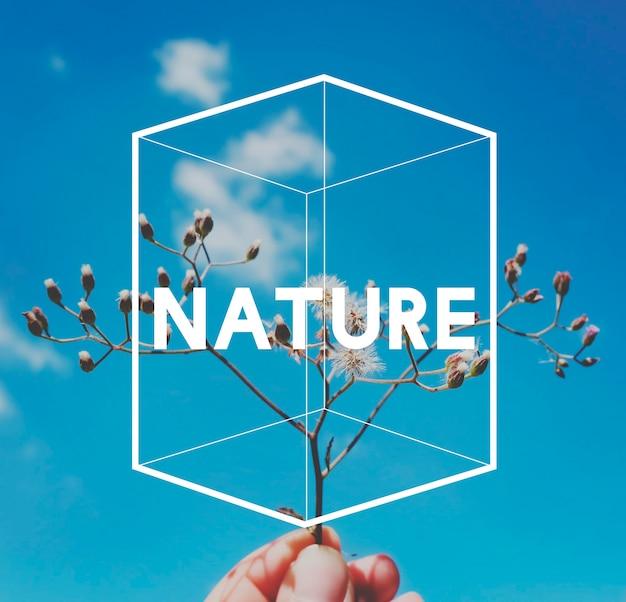 Naturfrühlingswort auf hintergrund des blauen himmels
