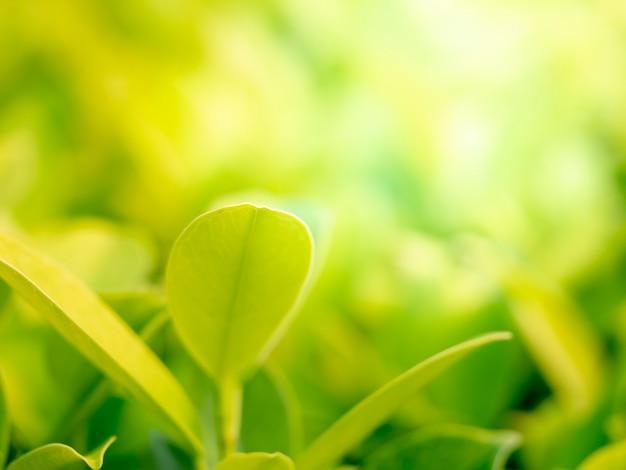 Naturgrün verlässt weichzeichnung