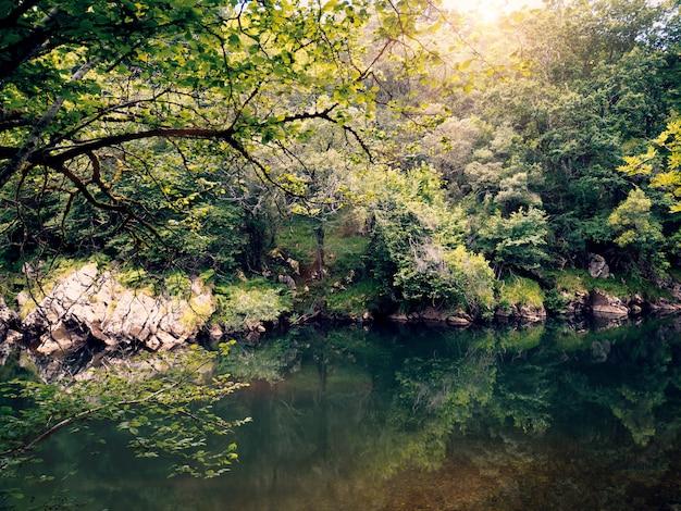 Naturhintergrund mit waldbäumen und see
