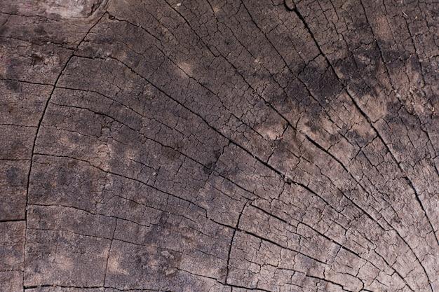 Naturholzbeschaffenheit des geschnittenen baumstammes, nahaufnahme
