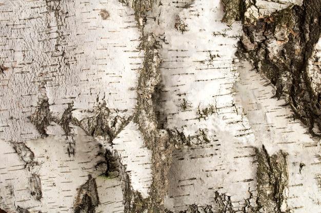 Naturholzhintergrund. weiße birkenrinde. nahaufnahme.
