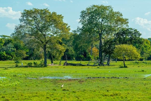 Naturlandschaft des feuchtgebietes mit baumfeldern und teichen in pocone mato grosso brasilien