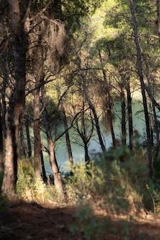 Naturlandschaft mit bäumen und fluss