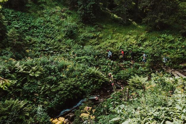 Naturlandschaft mit einer gruppe von menschen mit rucksäcken, die im wald gehen