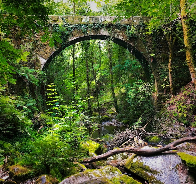 Naturpark fragas de eume