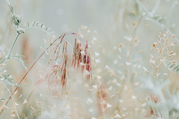 Naturpastellfarbe beige und kühle gedämpfte farben