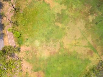 Naturrasen Textur