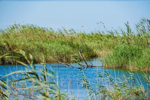 Naturteich guter ort für vogelbeobachtungen ulal de baldov im naturpark albufera sueca valencia