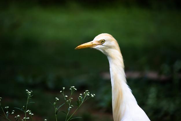 Naturtierbild von reihervogel oder ibis oder reiher, der und wilde pflanzen für schädlinge hocken