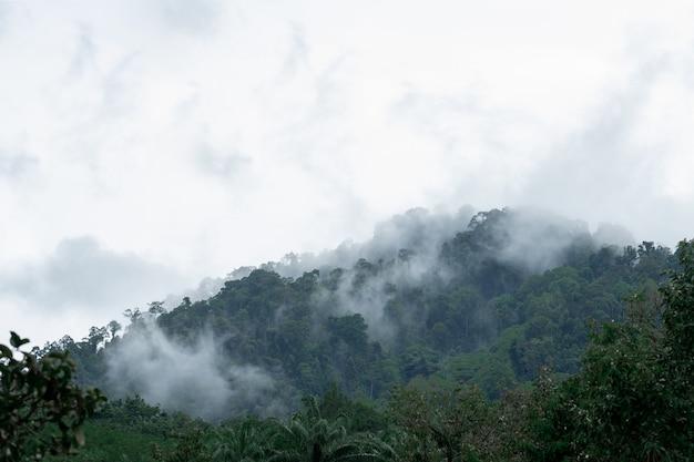 Nebel auf dem berg nach starkem regen in thailand.