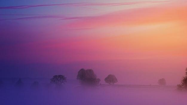 Nebel bedeckte bäume mit einem lila sonnenuntergang über ihnen.