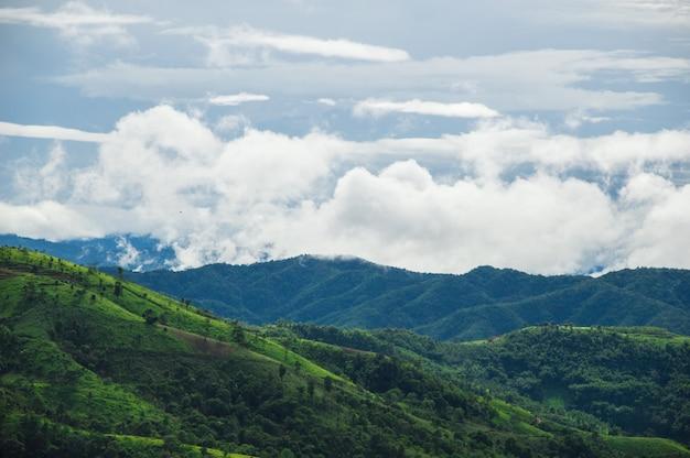Nebel bedeckte die grünen berge nach dem regen.
