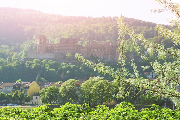 Nebel heidelberg-schlosses morgens mit frühjahrblättern