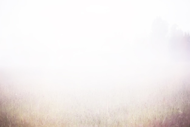 Nebel im feld. abendnatur im sommer mit weißem nebel.